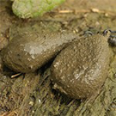 Svariņi Textured Flat Pear ir Distance